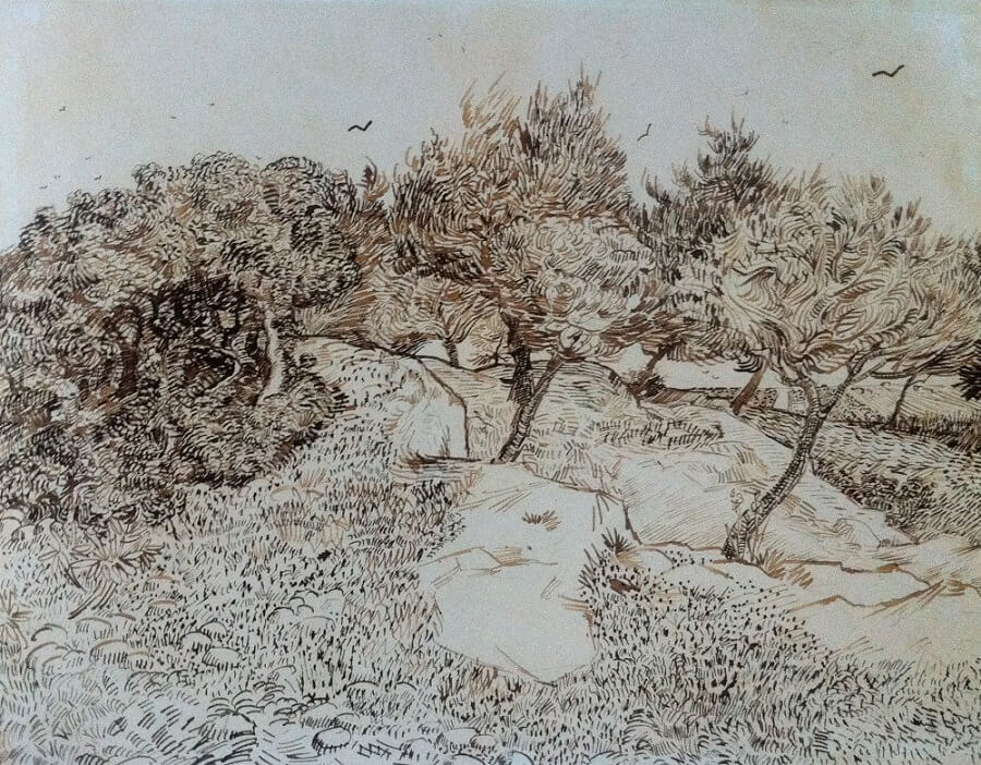 Olive Trees Montmajour - by Vincent van Gogh