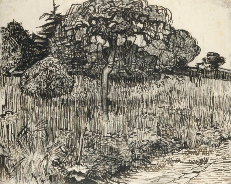 Van Gogh Drawings Trees Weeping Tree in the Gr...