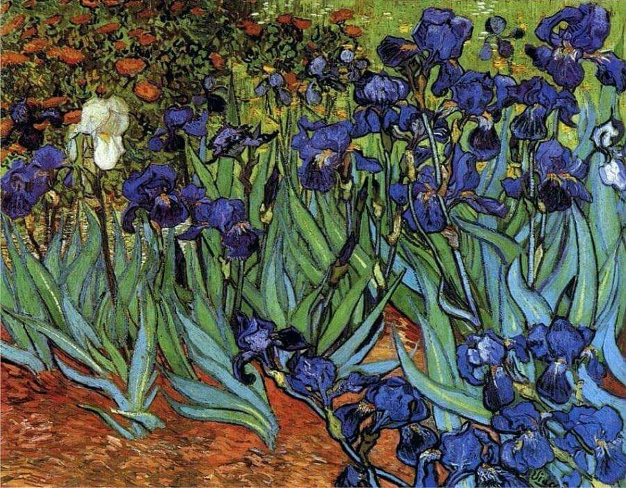 10 Facts That You Dont Know About Irises By Vincent Van Gogh